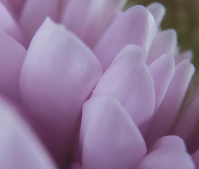 petalscloseupweb